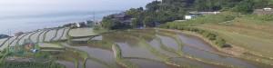 本谷の棚田の写真